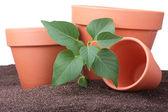 Ceramic pots — Stock Photo