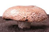 Mushroom — Foto Stock