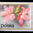 Poland - CIRCA 1974: A stamp Rhododendron — Stock Photo