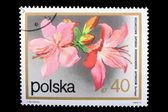 Poland - CIRCA 1974: A stamp Rhododendron — Stock Photo