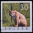 Poland - CIRCA 1965: A stamp Lynx — Stock Photo