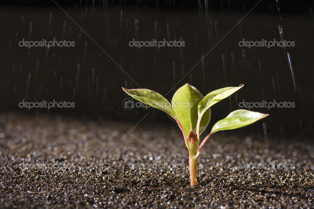 A young green plant with water on it growing out of brown soil. — Stock fotografie #3591885