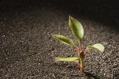 Plant — Foto de Stock
