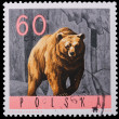 Poland - CIRCA 1965: A stamp bear — Stock Photo