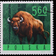 Poland - CIRCA 1965: A stamp bison — Stock Photo