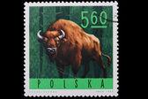 Poland - CIRCA 1965: A stamp bison — Stock Photo