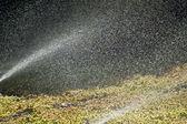 Sprinkler — Photo
