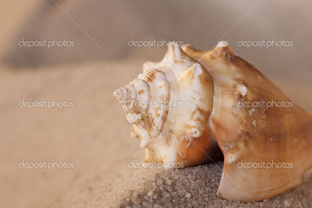 Old empty shell on sand of sea coast.  Stock Photo #3900913