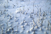 Winter field — Stock Photo