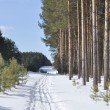 图库照片: Ski track in winter forest