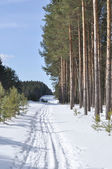 Ski track in winter forest — Fotografia Stock