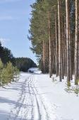Lyžařská stopa v zimním lese — Stock fotografie