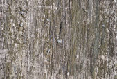 Weathered wooden background with lichen — Stock Photo