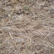 Last year's dry grass background — Stock Photo
