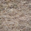 Stock Photo: Last year's dry grass background