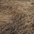 Last year's dry grass texture — Stock Photo