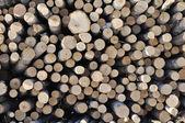стек березовых бревна — Стоковое фото