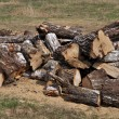 Pile of large birch chocks — Stock Photo