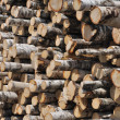 Stack of birch logs background — Stock Photo