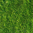 Sunny grass. highly detailed texture - Stock Photo
