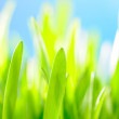 Green grass against the sky background — Stock Photo