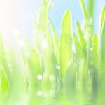 Fresh wet grass in sun rays, closeup — Stock Photo