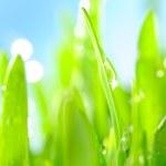 Fresh wet grass in sun rays, closeup — Stock Photo #3204050