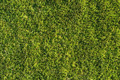Natural grass texture — Stock Photo