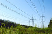 Power lines in forest — Stock Photo