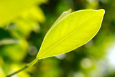 Closeup picture of green leaf — Stock Photo