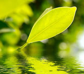 Fresh green leaf highlighted by sun on water — Stock Photo