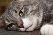 Cat snoot — Stock Photo