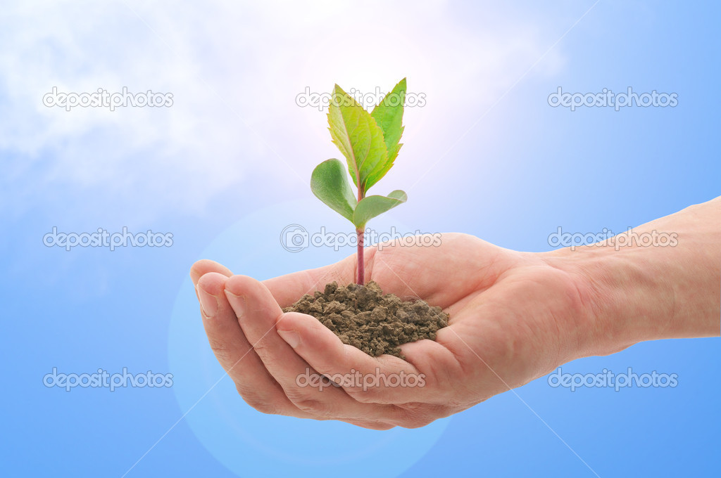 Hand with a plant, blue sky with sun  Stock Photo #3085327