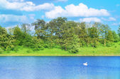 Landscape with a swan — Stock Photo