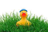 Rubber duck in grass — Stock Photo