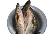 Grey mullet — Stock Photo