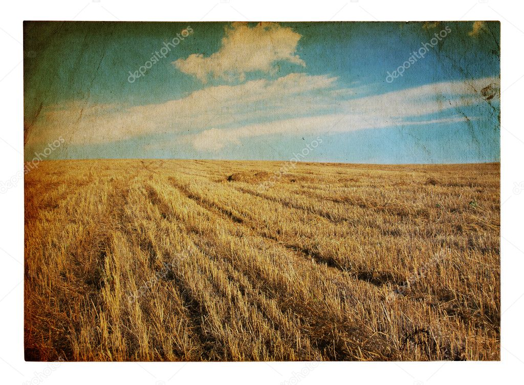 Old grungy illustration, autumn fields — Stock Photo #3310583