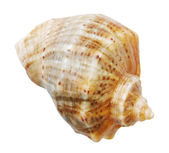Shell mollusks — Stock Photo
