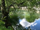 Summer reflection — Stock Photo