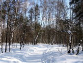 Kış manzara — Stok fotoğraf