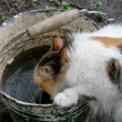Drinking cat — Stockfoto #3716054