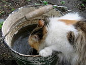 Drinking cat — Stock Photo