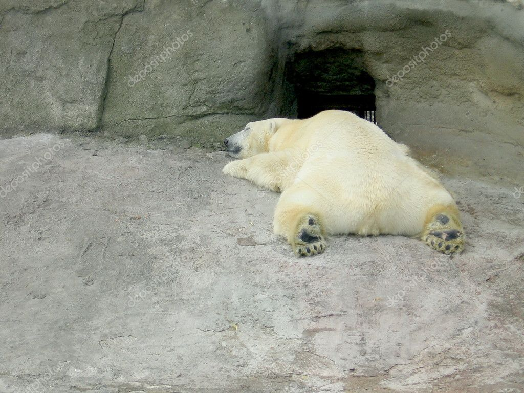 Large white bear sleeps on the rock at Moscow zoo — Stock Photo #3720227