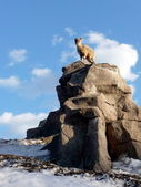 Goat kid on rock — Stock Photo