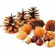 Cones and nuts — Stock Photo