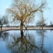 Lonely tree with reflection in water — Stock Photo