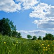 Meadow with fowers and blue sky - Stock Photo