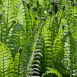 Fresh Green Fern Frond — Stock Photo #3432665