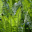 Fresh Green Fern Frond — Stock Photo