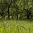Fruit orchard - Stock Photo